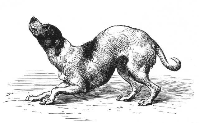 One of Darwin's Dog Illustrations