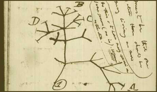 Darwin's Sketch of a Cladogram